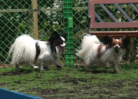 2010_0526dogrun_chibi0019.jpg