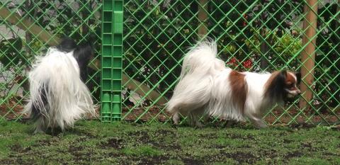 2010_0526dogrun_chibi0067.jpg