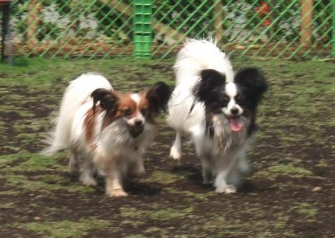2010_0526dogrun_chibi0115.jpg