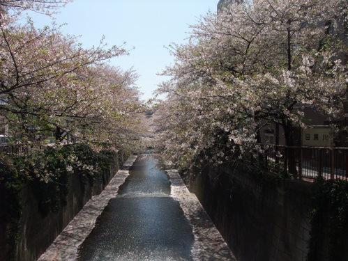 2011_0415hakone0001.jpg