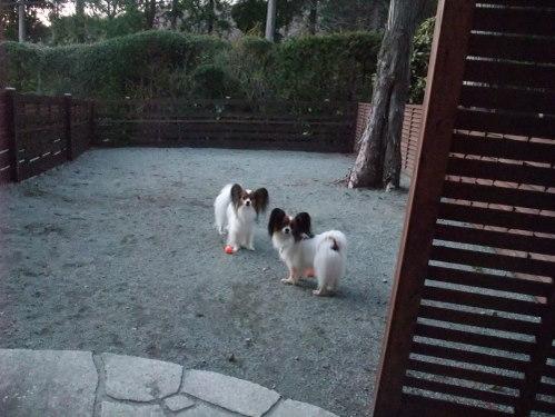 2011_0415hakone0049.jpg