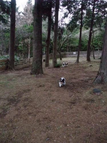 2011_0415hakone0067.jpg