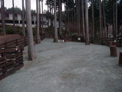 2011_0415hakone0074.jpg