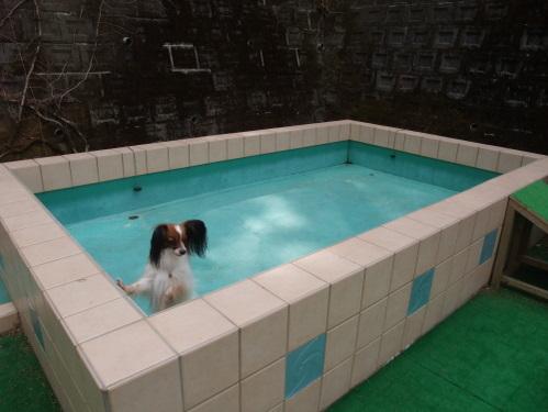 2011_0415hakone0147.jpg