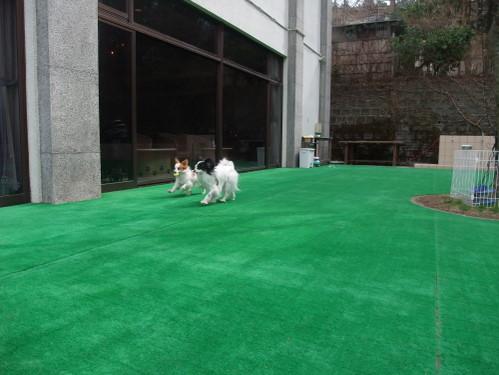 2011_0415hakone0157.jpg