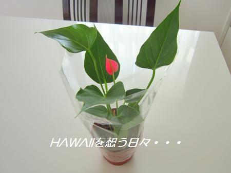 IMG_1439[1]_convert_20121019134545