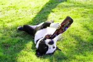 ビール飲むわんこ