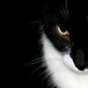 顔半分ネコ