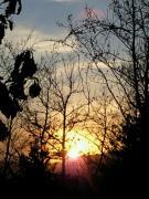 100206ハヤノ牧場の夕陽1小