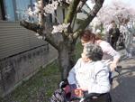 茶屋町の桜3
