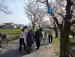茶屋町の桜1