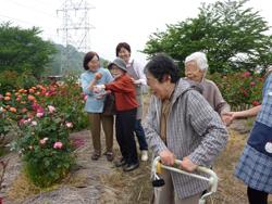 種松山バラ10