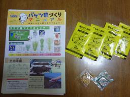 バケツ稲1