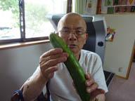 金平さんの胡瓜
