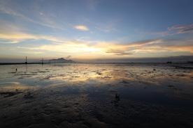 干潟の写真
