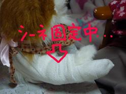 みーちゃん負傷3