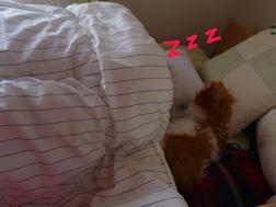 Bさん昼寝