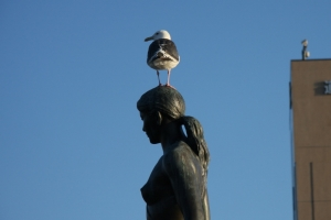 sea gull_top3