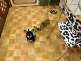 2010-4-22youchien7.jpg