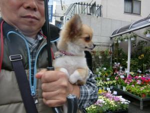2010-4-22youchien8.jpg