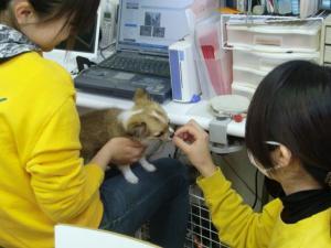 2010-4-9youchien12.jpg