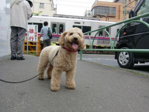 2010-5-10youchien10_20100517122354.jpg