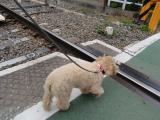 2010-5-10youchien12.jpg