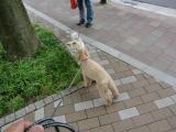 2010-5-10youchien16.jpg