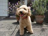 2010-5-10youchien2_20100517122244.jpg