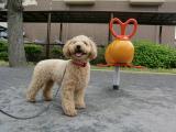 2010-5-10youchien8_20100517122355.jpg