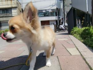 2010-5-13youchien10.jpg