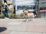 2010-5-13youchien12.jpg
