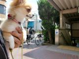 2010-5-13youchien3.jpg