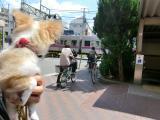 2010-5-13youchien4.jpg