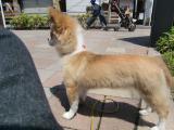 2010-5-13youchien7.jpg