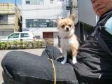 2010-5-13youchien9.jpg