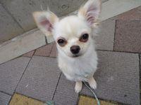 itakura1012_20100527185302.jpg