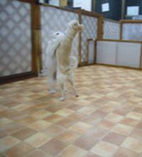 itakura260_20100221213112.jpg