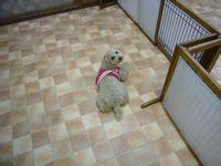 itakura354_20100309193939.jpg