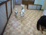 itakura409_20100314215919.jpg