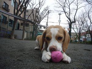 itakura449_20100321161643.jpg