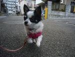 itakura463_20100321173042.jpg