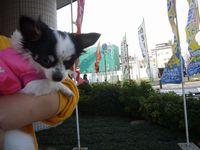 itakura468_20100321173413.jpg