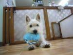 itakura484_20100322214301.jpg