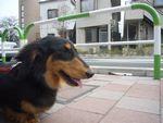 itakura506_20100328200456.jpg