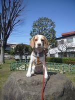 itakura580_20100404130210.jpg