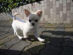 itakura643_20100406172630.jpg