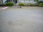 itakura789_20100421094256.jpg