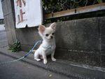 itakura804_20100423093024.jpg