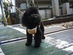 itakura817_20100427002321.jpg